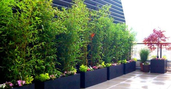 bambus pflanzen schwarze k beln reihe terrasse balkon outdoor pinterest bambus pflanzen. Black Bedroom Furniture Sets. Home Design Ideas