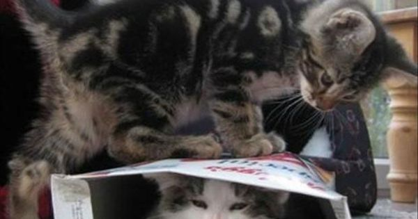 Funny kitties in a cereal box :)