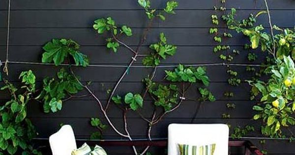 5 affordable ways to spruce up a patio inspiration - Six ways to spruce up your balcony ...