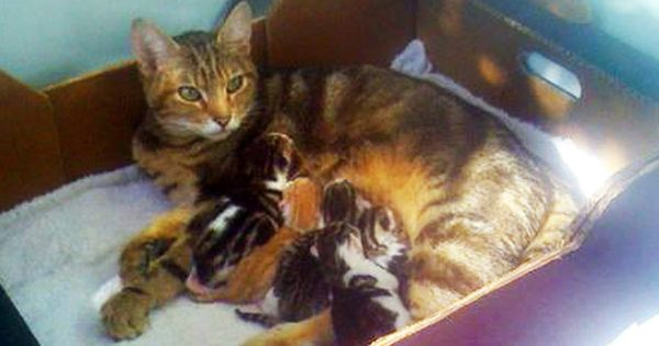 In A Spin Cat Gives Birth To Kittens Inside Tumble Dryer Kittens Cats Stray Cat