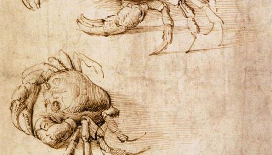 leonardo da vinci studies of crabs ink on paper paper. Black Bedroom Furniture Sets. Home Design Ideas