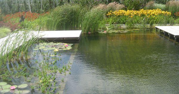 Schwimmteiche Platter Gartenwelt Garten Und Landschaftsbau Succulents