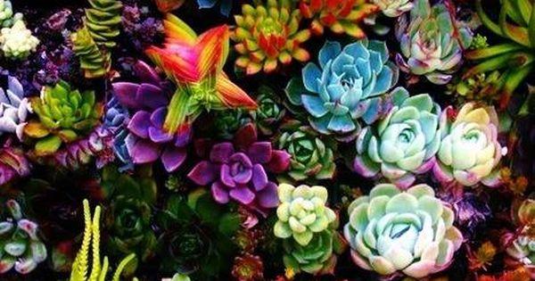 FENG SHUI Tip of the Day: Jade plants and succulents hold water
