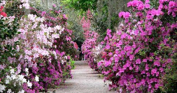 Entretien de jardin facile conseils pour les jardiniers amateurs entretien all e et magnolia for Conseil pour le jardin