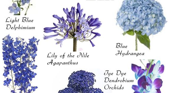 flower names by color blaue blumen blau und blumen. Black Bedroom Furniture Sets. Home Design Ideas