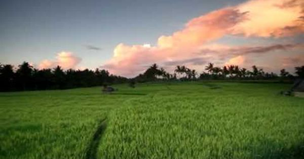 Bali Car Rental Info Http Indonesiamegatravel Com Bali Car Rental Info Bali Holidays Bali Flight And Hotel