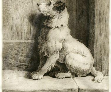 Herbert Thomas Framed Picture Dog