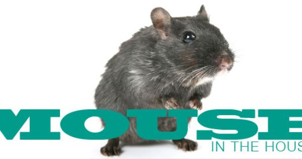 How To Keep Mice Out Of Your Home And Garage Mice Repellent Getting Rid Of Mice Rodent Repellent