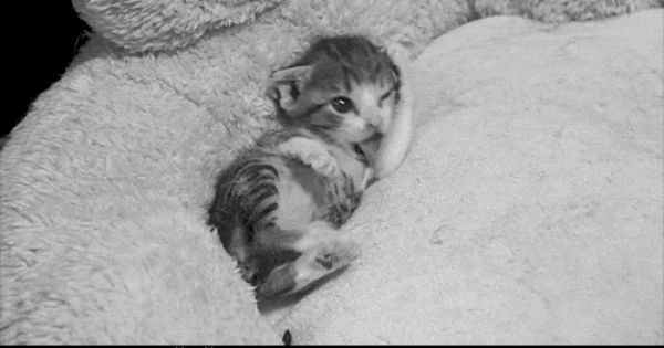 Animal Gifs Splort Kittens Cutest Baby Animals Cute Little Kittens