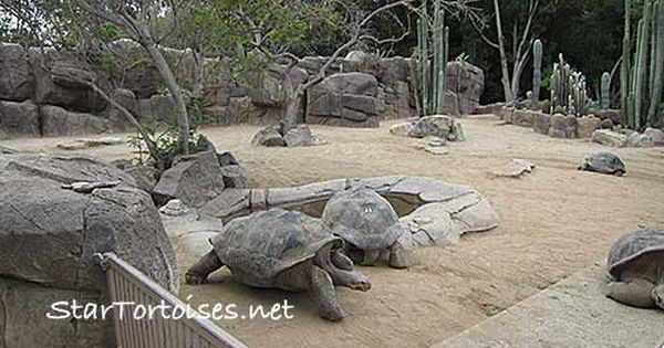 Pin By Jct On Chelonians Tortoise Enclosure Reptile Enclosure Zoo