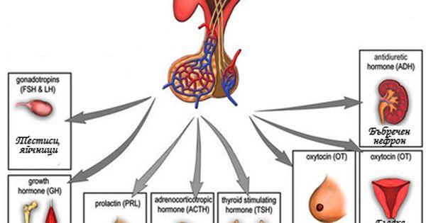 ¿desaparecen los síntomas del cáncer de próstata reaction