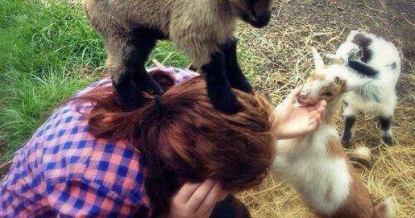 Love my goats! | bah hahaha! | Pinterest | Goats, I Want ...