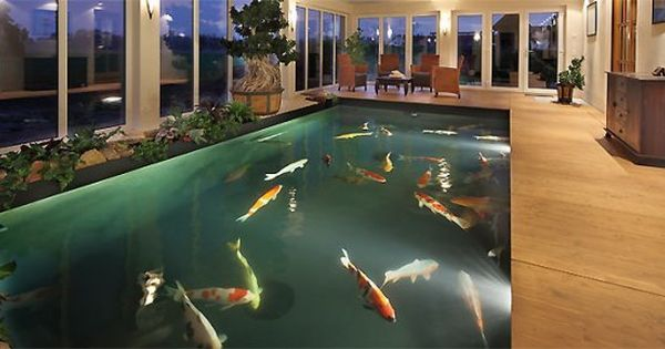 Indoor koi pond wanttttttttttttttttttt home sweet home for Indoor fish pond ideas