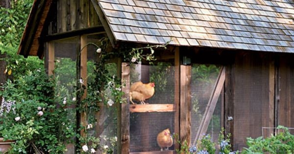 What a cute chicken coup! someday I'm going to incorporate a chicken