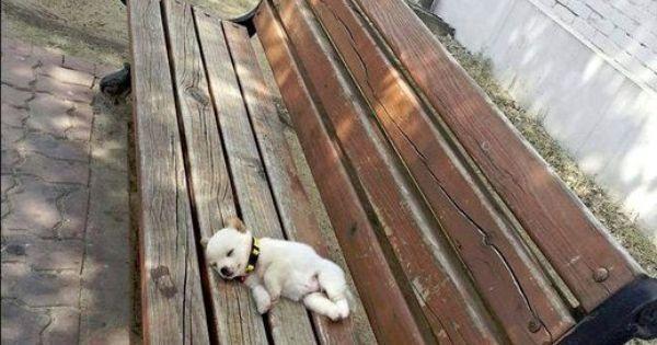 Tiny puppy taking a break mid-walk