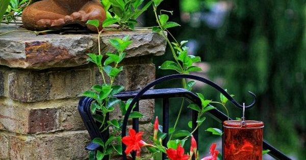 Mandevilla vine is a prolific vine that twines around any structure. I