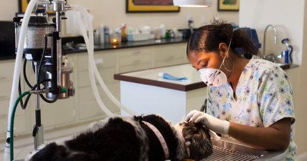 What Does Pet Insurance Cover Standard Pet Insurance Policies Cover Accidents And Illnesses However Some Pet Insurance Companies A Pet Health Insurance Dental Services Dental
