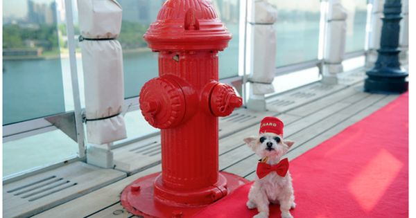 The Queen Mary 2 Has Expanded Its Kennel Offerings For Pet Travelers Queen Mary Yorkie Mix Kennel