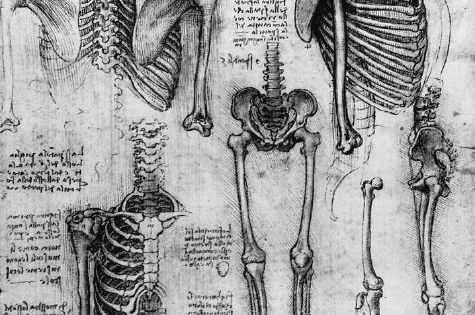 Drawings by Leonardo da Vinci... orthogonal views of the skeleton (c 1510-11). (From the collection of Her Majesty the Queen).