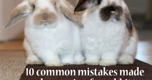10 common mistakes when caring for rabbits