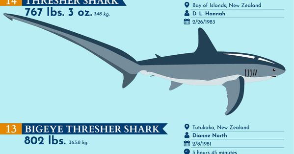 The 30 Biggest Record Breaking Fish Ever Caught In 2020 Infographic Infographic Health Infographic Marketing