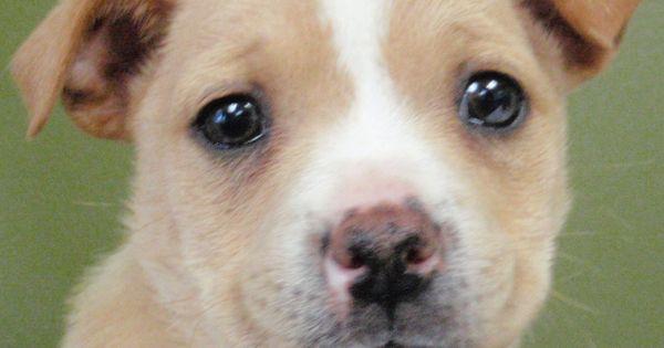 Adopt Renee Call Us At 858 676 1600 Pets Adoption Animals