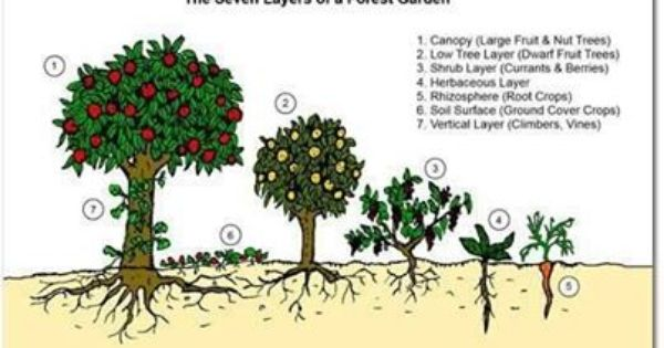 ee5b5c43fd5a4cdc0f1dbba3f4f30fbc - The Vegetable Gardener's Guide To Permaculture