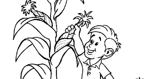 corn plant coloring pages - photo#18