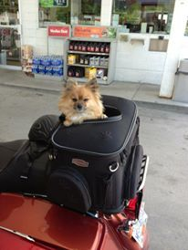 Best Motorcycle Dog Carriers For Your Traveling Small Dog Small