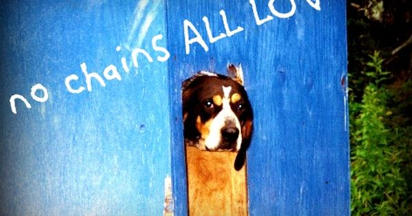 No Chains All Love Halifax Ns With Images Love Is All Dogs