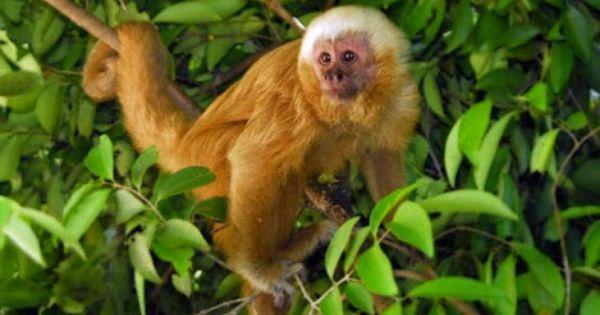 Pin De Vna Em Beautiful Animals Primatas Fotos De Animais Animais