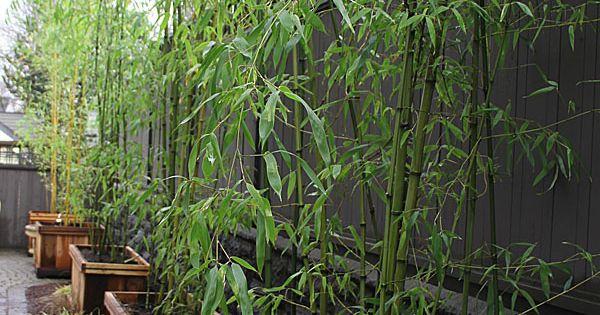Ideas diy para tener m s privacidad en el jard n jard n for Jardin bambu
