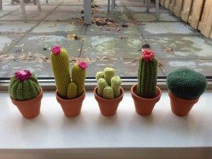 Ongebruikt Cactussen haken (met afbeeldingen) | Cactussen, Haken, Gehaakte cactus WC-53