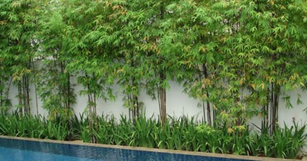 Poolside Bamboo Privacy Screen Could Work Along Fences