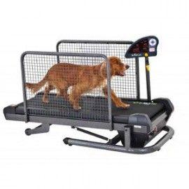 tapis de marche petit pour chien