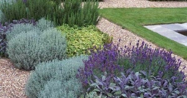 Full sun low maintenance drought tolerant plants by for List of low maintenance plants