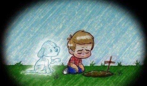 Cuando Un Perro Muere Pierdes Un Amigo Pero Ganas Un Angel