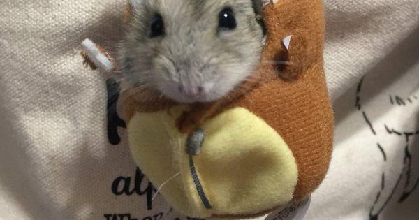 Embedded Lustige Hamster Tiere Lustige Tiermemes