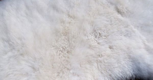 How To Clean And Wash A Natural Sheepskin Rug With Images Sheepskin Rug Rugs Sheep Rug