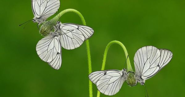 These Butterflies Look Like Flowers