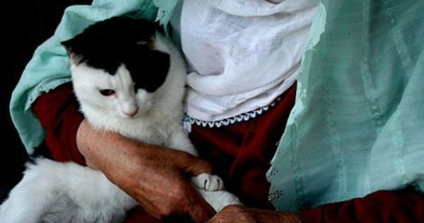 Teaching Tales: When the Cat Came to Muhammad - Beliefnet