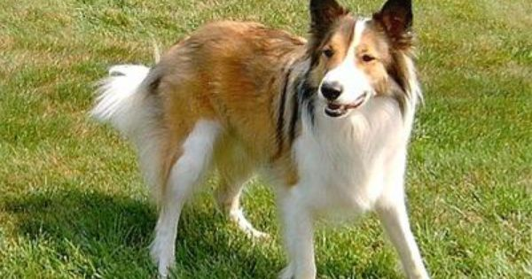 Pin On Canis Lupus Un Familiaris
