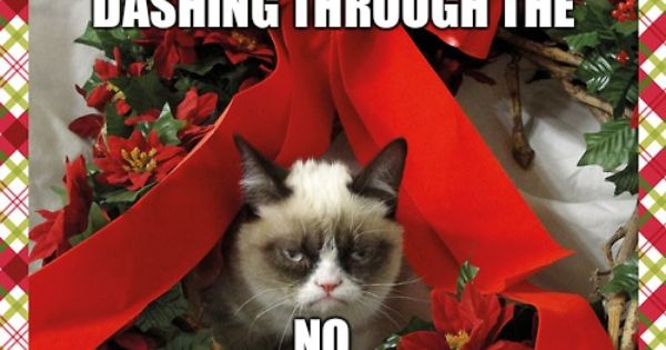 grumpy kitty is not in the holiday spirit