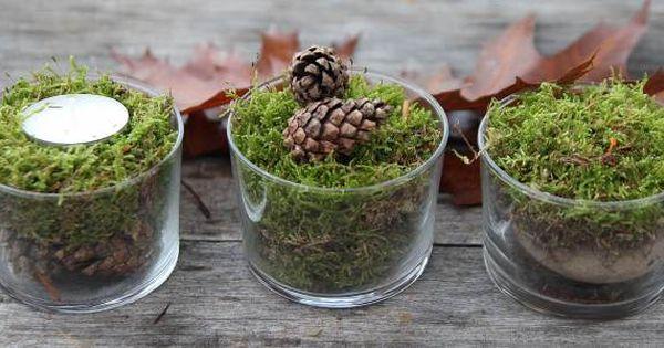 Herbstliche dekoration moos im glas herbst pinterest - Nussschalen deko ...