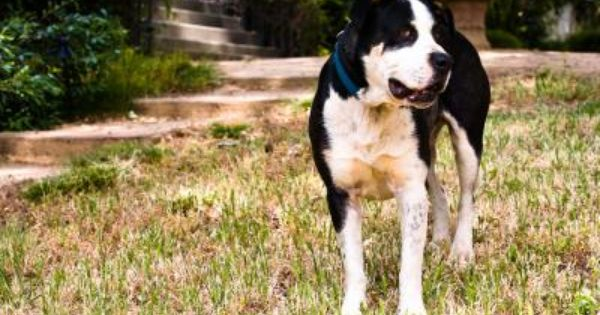 Keeping A Dog Outside Year Round Fleas Hookworms In Dogs Flea Repellent