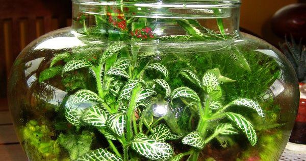 Giardino in bottiglia terrario giardini in miniatura - Giardini in bottiglia ...