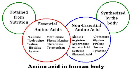 essential amino acids essential amino acids vs non essential amino acids 5753