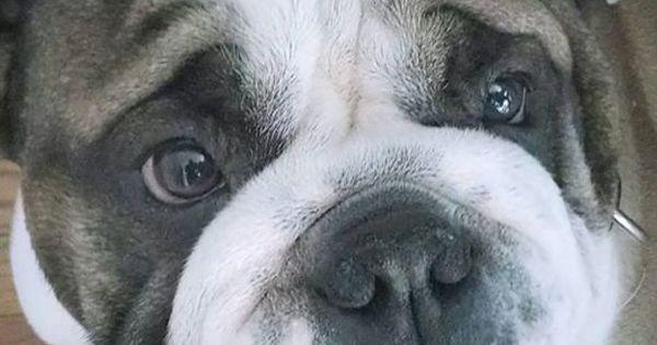 Dog - photo