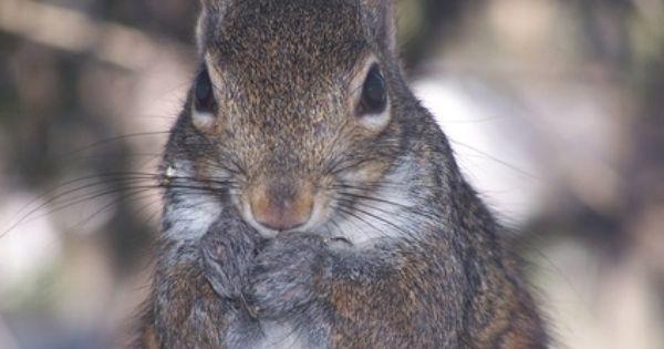 efb5422c156deab46c96c5babfc320af - How To Get Rid Of Squirrels In My Ceiling