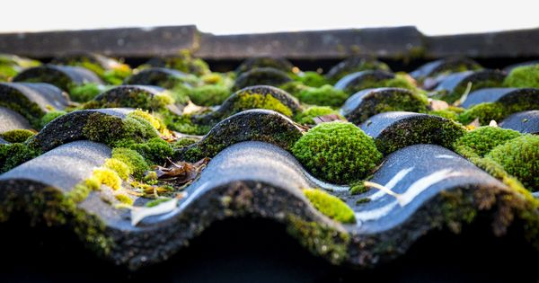 Does Your Roof Look Far Too Green For Your Liking Use The Following Methods Tools And Materials To Eradicate Moss From Your Ro Roof Cleaning Roof Roof Tiles